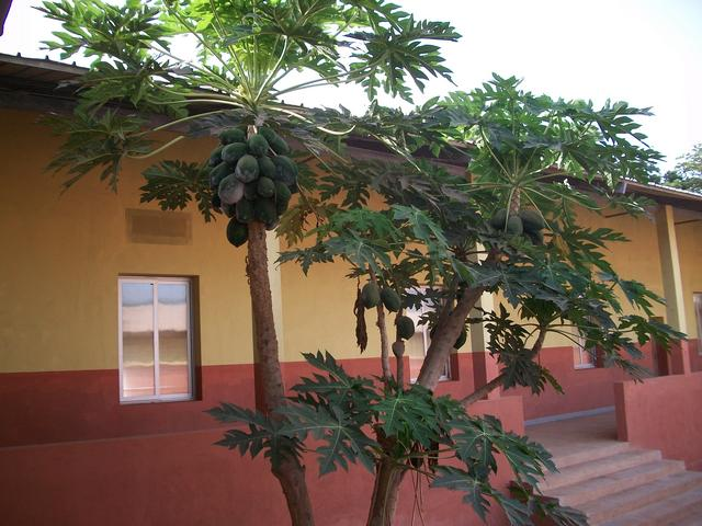 Guinea 2010 077