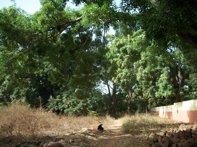Guinea 2010 101