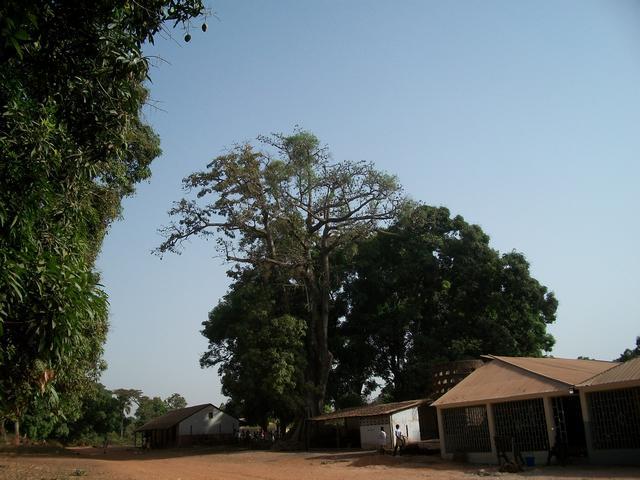 Guinea 2010 104