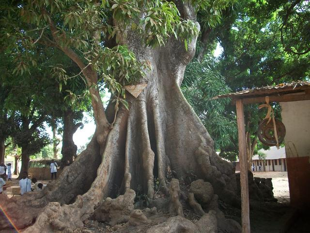 Guinea 2010 105