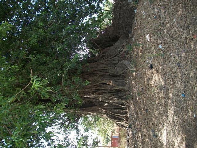 Guinea 2010 143