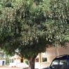 Guinea 2010 050