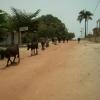 Guinea 2010 284